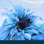echte-vlinder