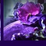 violtjes